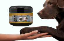 The correct care for the dogs paws