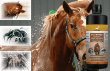 Horse shampoo against itching