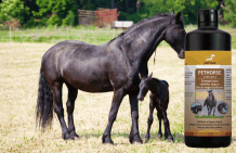 black horses shampoo for black horses